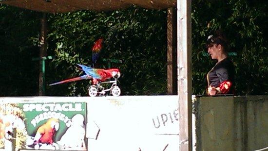 Le Jardin Aux Oiseaux : Spectacle des perroquets