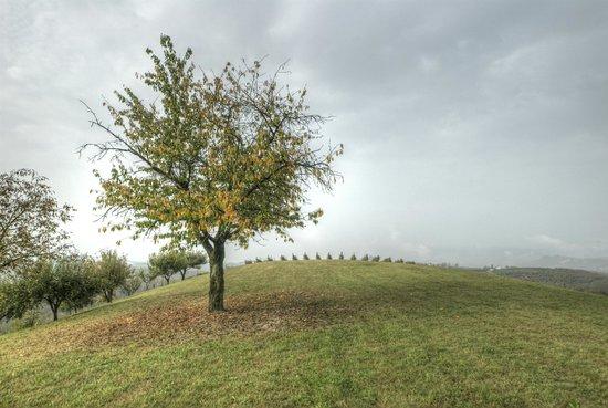 Alla Cascina Baresane : La collina e le vigne