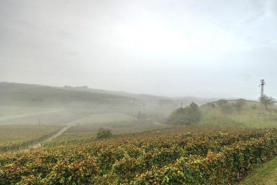 Alla Cascina Baresane: Le colline circostanti