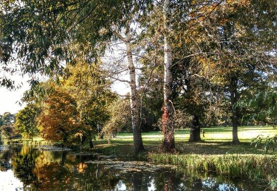 Alexandria Dendrological Park: где-то в парке