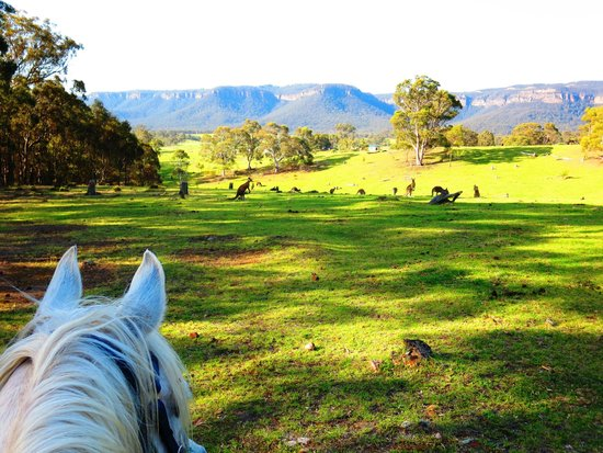 Centennial Glen Stables: Looking out over the kangaroos