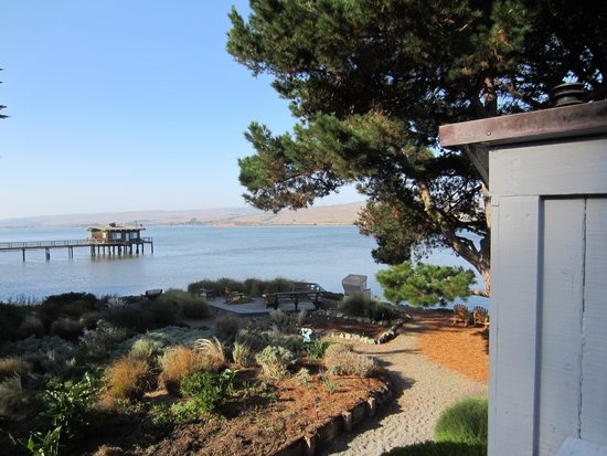 Dancing Coyote Beach: view of Tomales Bay from Birch upstairs deck