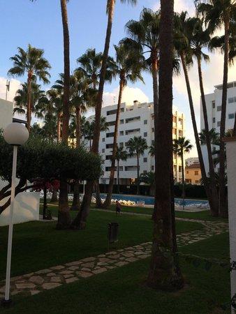 Apartamentos Tamarindos : Vu sur la grande piscine depuis notre terrasse.