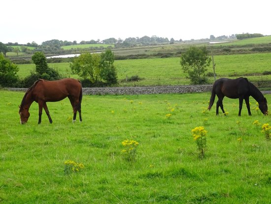 Carrygerry Country House: horses