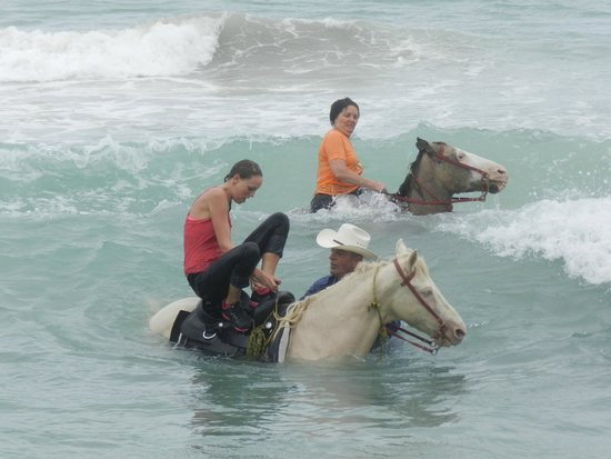 Equus Rides: Cane Bay on the North Shore horseback riding!