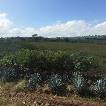 Tequila Herradura: Vista desde Tequila Express