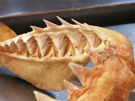 Natal Shark Board: Great White Shark Jaw