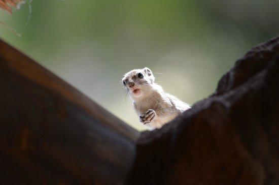 Huab Lodge: des petits curieux viennent rendre visite