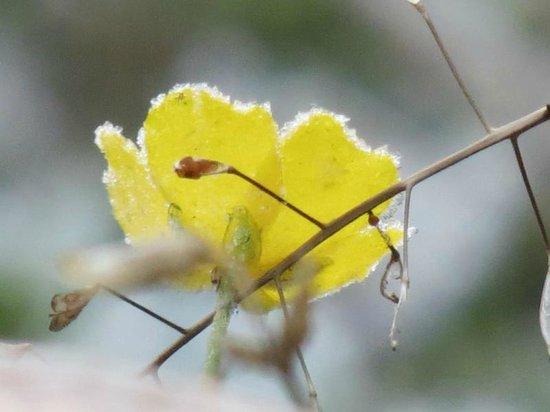 Beaverfoot Lodge: Wildflowers