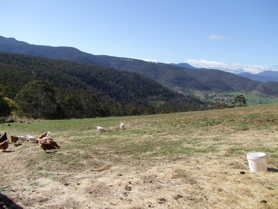 Heimat Chalets : The View