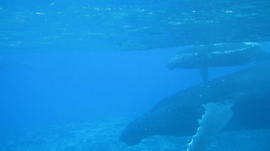 Moorea Deep Blue: Mum & Bub in the deep blue of Moorea