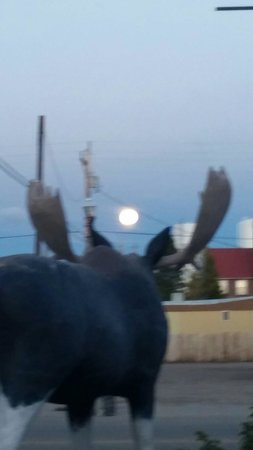 Moose Creek Cafe: Full moon above the moose