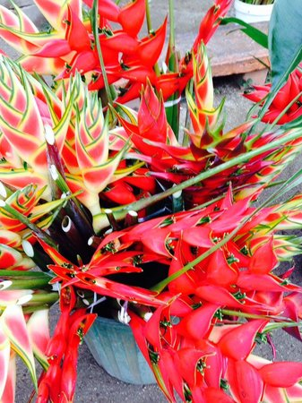 Mariner Apartments : Port Vila Flower Market