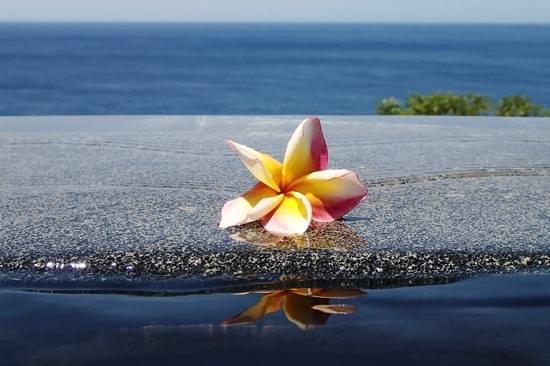 Bedulu Resort: horizon pool