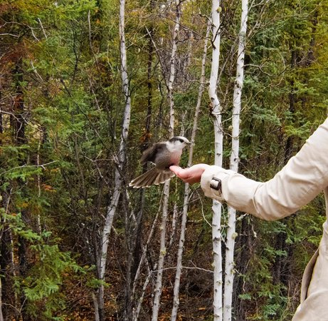 My Backyard Tours - Day Tours: Bird feeding