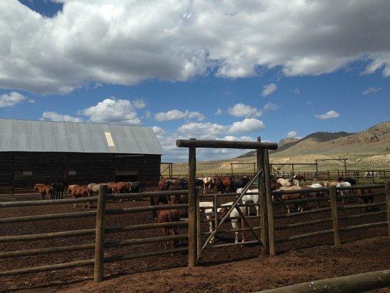 Laramie River Dude Ranch : The horses