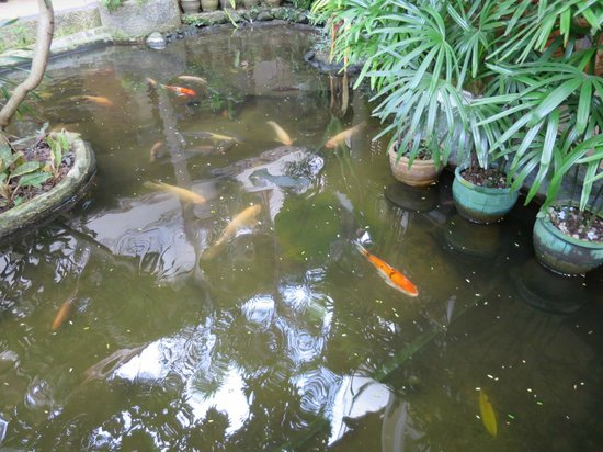 Thai Palace Resort: Open waterways with fish