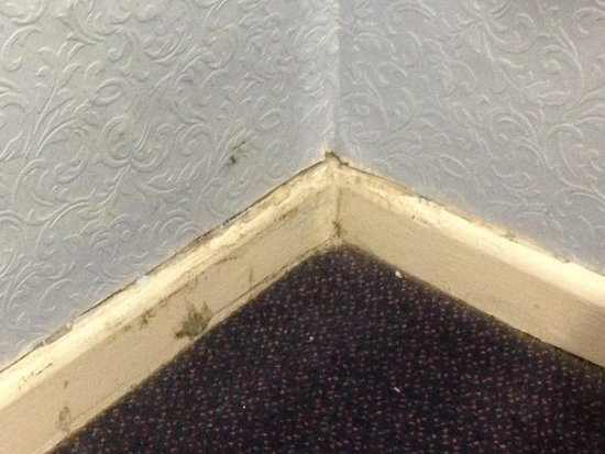 The Longboat Hotel: Mould at floor level