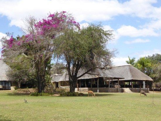 Inyati Game Lodge : Amazing game lodge on the Sabi River