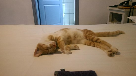 Notos Hotel: Local cat makes himself at home