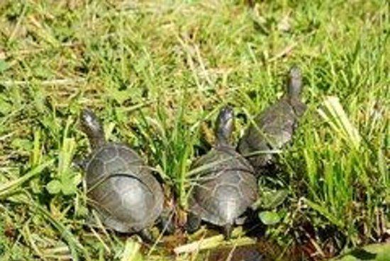 Le village des Tortues : tortue