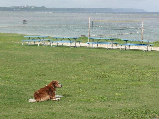 ジェフズ パイレーツ コーブ, 太平洋と足の悪い犬
