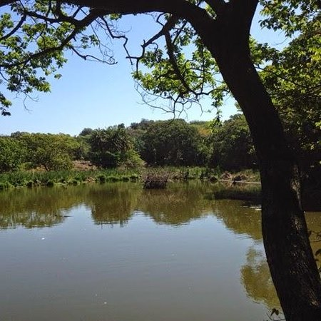 Kenneth Stainbank Nature Reserve: Dam in the middle of the reserve