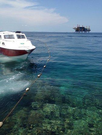 Borneo Divers Mabul Island Resort : View from BD Jetty