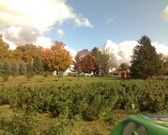 Tuckerman Farms