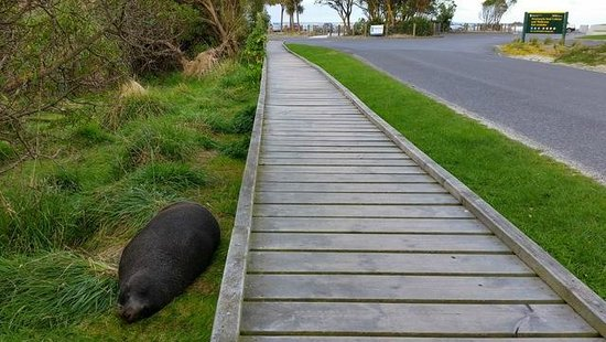 Peninsula Walkway: lazy sleeping