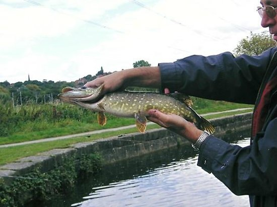 Leeds and Liverpool Canal: My first pike.