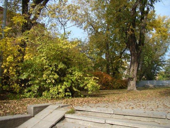 Vayner's Garden