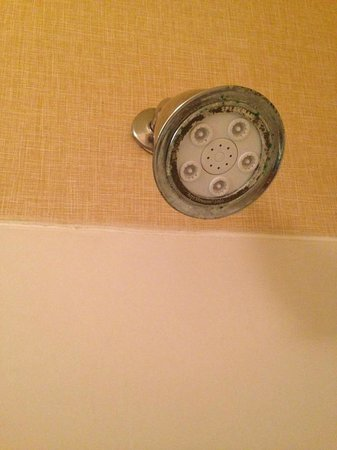 Residence Inn Jacksonville Butler Boulevard: Here is the crusty crab shower head, only Sponge Bob was no where in sight.