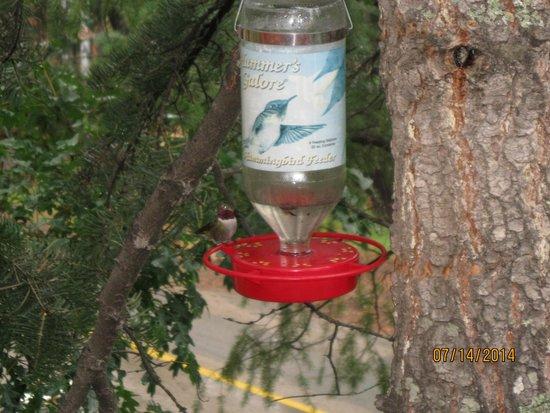 Mountain Air Cabins : The Hummingbird Visiting...
