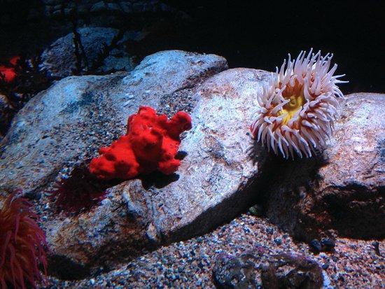 Pharaoh Cuttlefish Picture Of Monterey Bay Aquarium