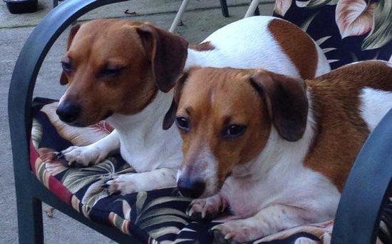 Hampton Inn Carlisle: We are pet friendly!