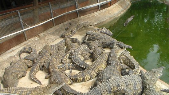 Crocodile Park: 3