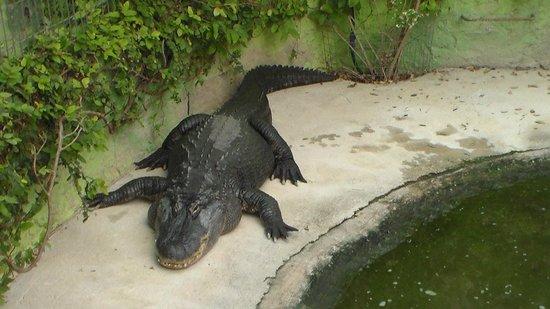 Crocodile Park: 1