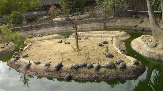 Crocodile Park: 2