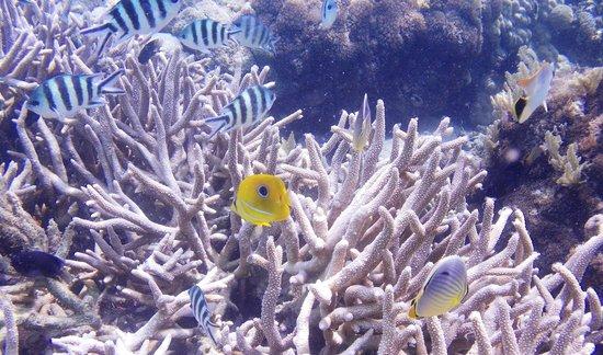293 on Komba Guest House : Amazing snorkeling