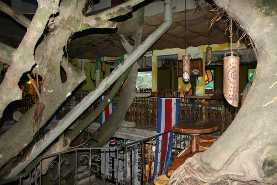Tree House Restaurante & Cafe: Interior