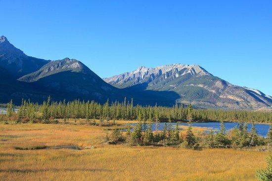 Athabasca River: Nördlich von Jasper