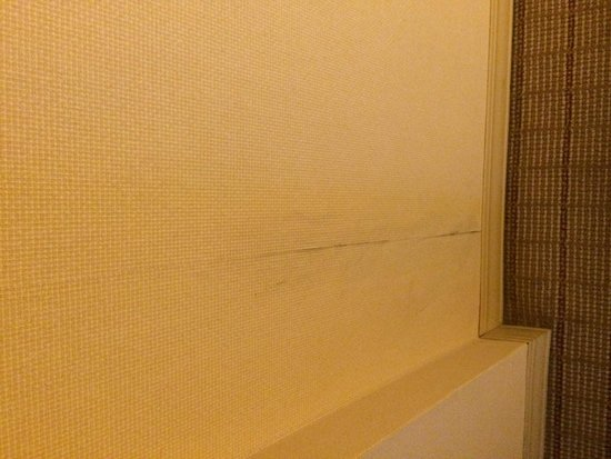 DoubleTree by Hilton Orlando Downtown: Room condition