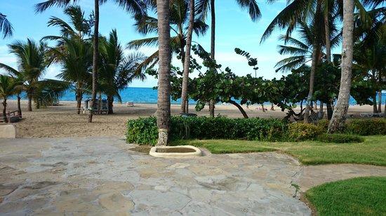 Cabarete Palm Beach Condos : View of Beach