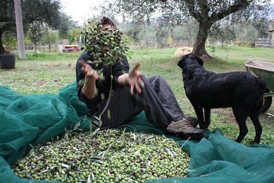 Chez Raz B&B: Happy olive picking