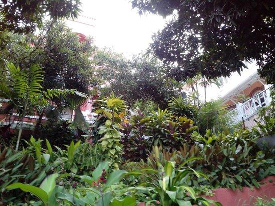 Bossa in Rio Hostel: jardim