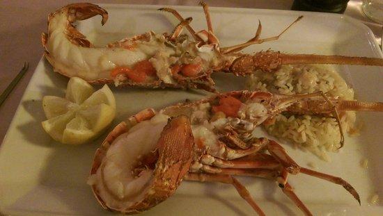 Emperador : Fresh lobster