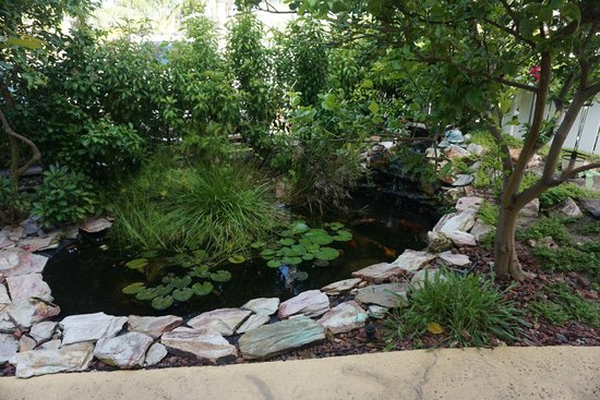 Ebb Tide Oceanfront Resort in Pompano Beach, Florida: Koi pond outside our room restful and sweet'