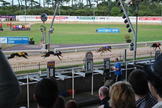 Greyhound Stadium - Curraheen Park: la carrera