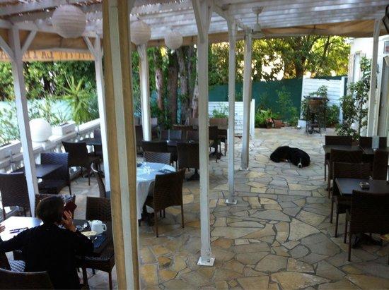 Hotel Oxford: Терраса отеля и знаменитая собака !